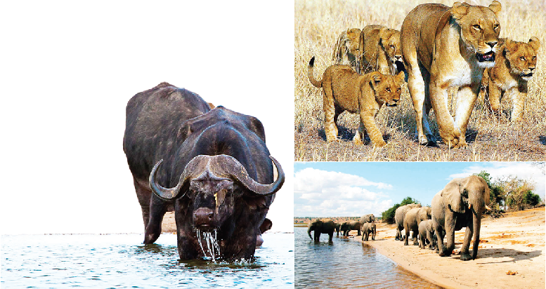 Govt to pay $8,000 to families of those killed by wild animals