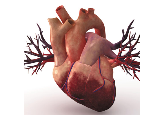 Erectile dysfunction increases risk of heart health