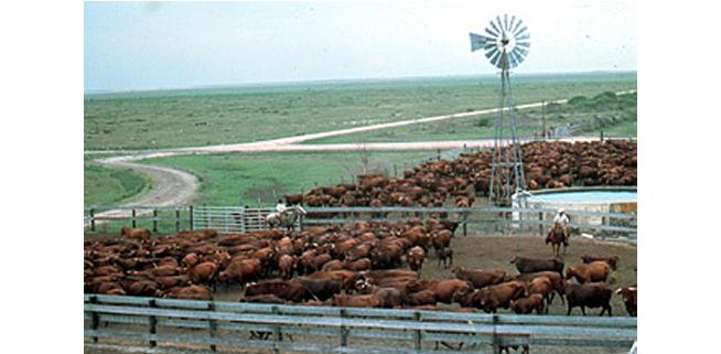 We'll resist cattle colonies in South-East–MASSOB/BIM