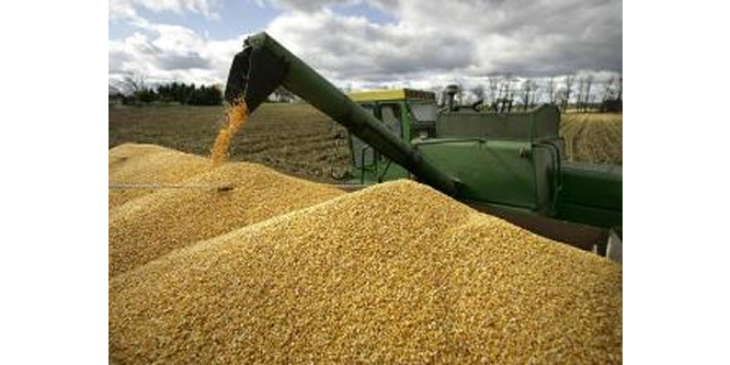 Wheat import to Nigeria hits N31.47bn