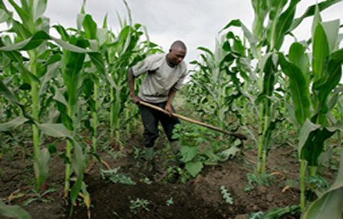 Katsina government committed to agricultural mechanization – DG media