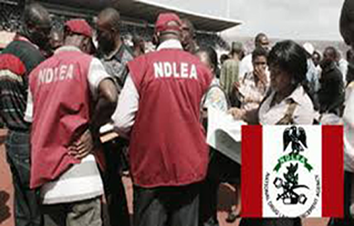 NDLEA nabs 55 drug traffickers  in Niger