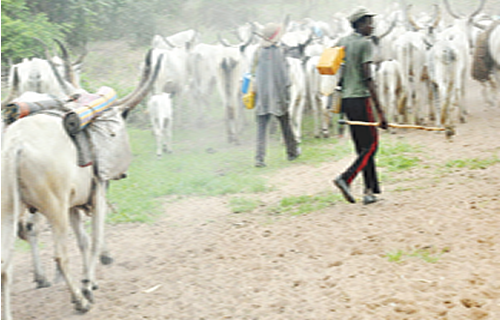 We won't allow cattle colony in South-East- MASSOB/BIM