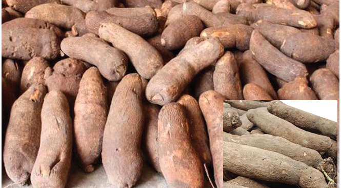 New yam out, price decrease marginal