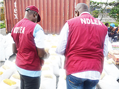NDLEA destroys 40 hectares of Indian hemp plantation in Ibadan