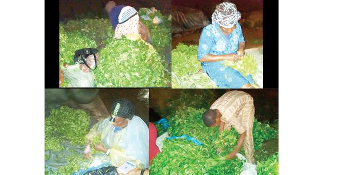 Vegetable farm: Women of calloused hands, financial power