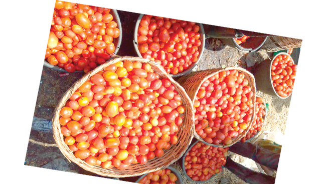 Prices of tomatoes, yam crash at Mile 12 Market