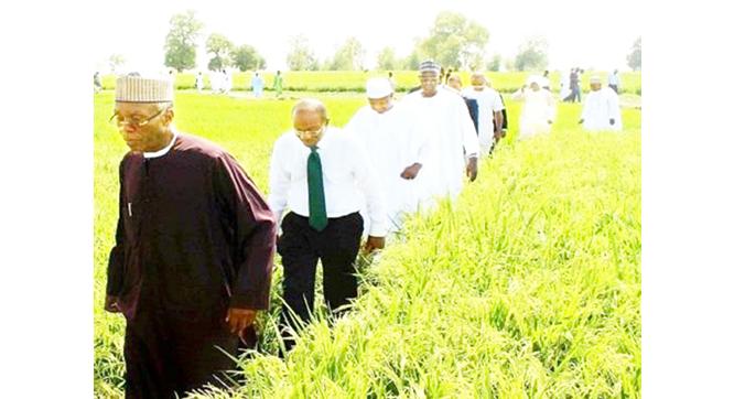 Nigeria's rice self-sufficiency target jinxed