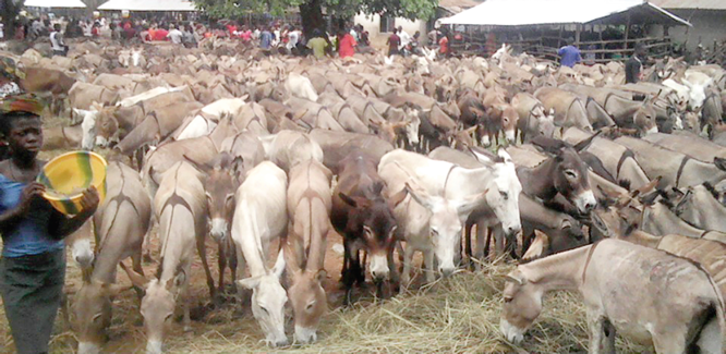 For Ebonyi residents, it's donkey business