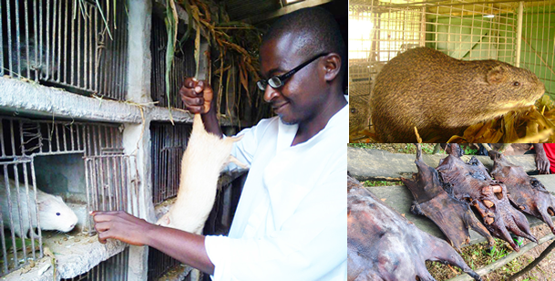 'Grasscutter farming has made me a multi-millionaire'