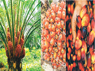 Nigeria spends N80.8bn on palm oil in 8 months