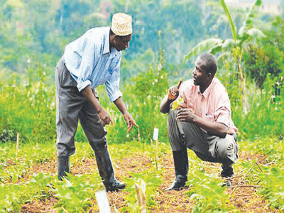 Japanese firm empowers farmers in Cross River