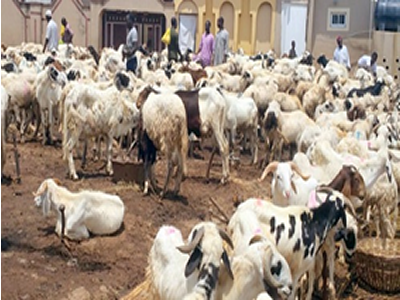 Eid-el-Kabir: Lagos bans sales of ram on highways, road medians