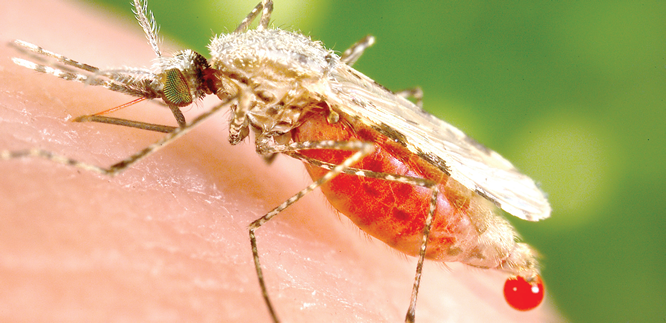 Effective medicines could scale-up malaria defeat