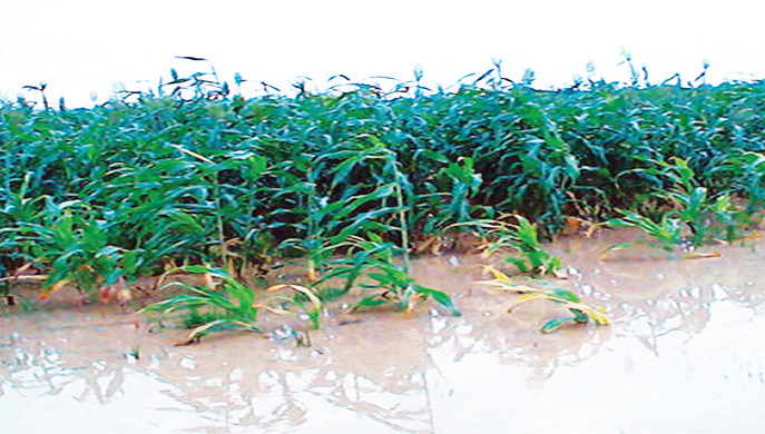 Ex-OAU VC harps on local technology to grow agric sector