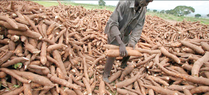 Apex bank CBN to create 2m jobs via cassava value chain