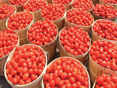 Firm, Kebbi partner on N20bn tomato factory