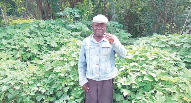 70-year-old farmer's plea: Herdsmen, leave my farm alone