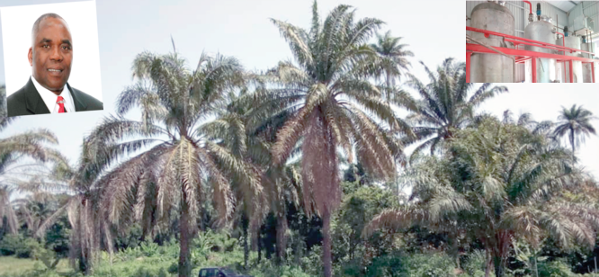 Why we want to revolutionise agriculture in Ijan – Ijadare