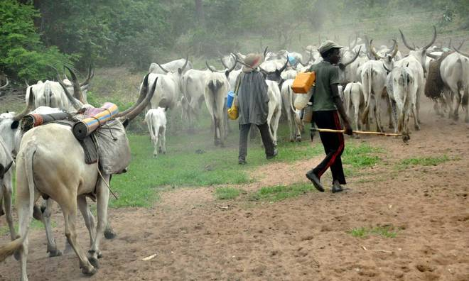 Fulani herdsmen to sue Oyo over Anti-Grazing Bill