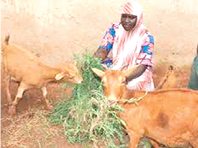 Empowering women through Goats Breeding Scheme