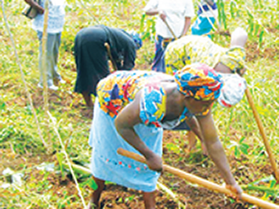 Labour seeks FG's intervention in farm workers' plights