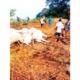 Ijare, community where lightning struck 36 cows dead on 'Sacred Hill'