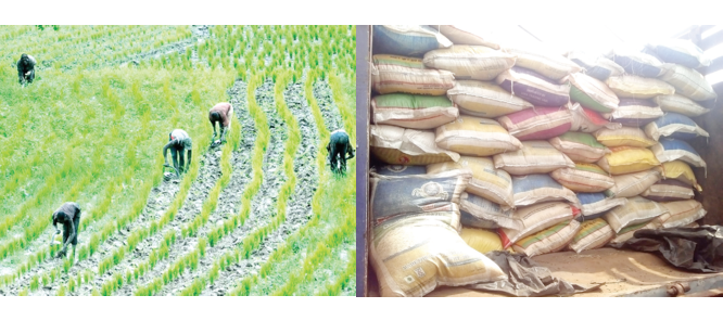 Nigeria grapples with insufficient mills, 4.79m tonnes rice deficit