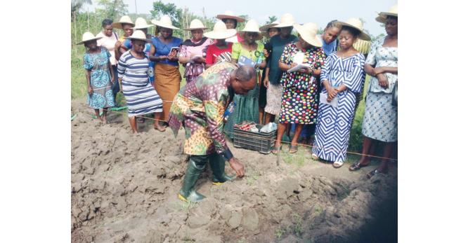 NRCRI: Empowering women yam farmers in enhanced food production